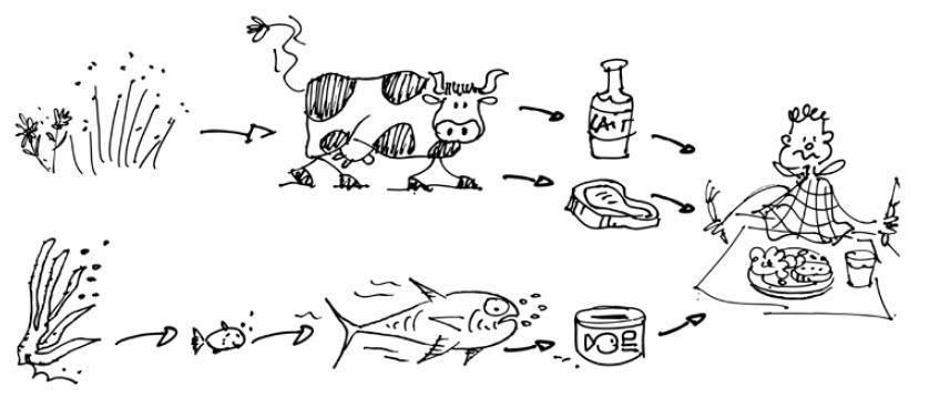 Substances dangereuses - La chaine alimentaire